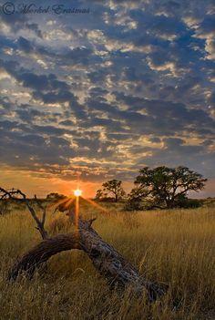 The untouched beauty of the Kalahari. Incredible! Photographer: Morkel Erasmus.