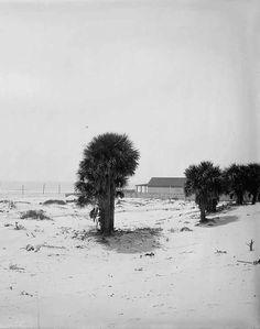 Isle of Palms near Charleston, South Carolina 1900 Sullivans Island, Isle Of Palms, Deep Down, Down South, South Carolina, Charleston, Beach, Outdoor, Outdoors