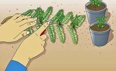 Farne selbst vermehren - so klappt's! - Wer ruhiges Grün in vollendeter Form in…