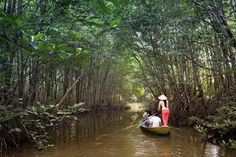 Can Gio Mangrove Forest by speed boat (full day) – Day trips Ho Chi Minh City / Danang | Enjoy a full day on this eco-adventure to the Can Gio UNESCO Biosphere reserve. You'll get there through the verdant green canals of the Mekong Delta while stopping at a lively local riverside, seeing monkeys and crocodiles and taking a rowing boat, and a trek in the mangrove forest.