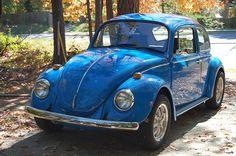 Cobalt blue beetle