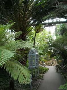 Great Hortus Botanicus Amsterdam Own Picture