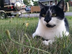 Lost Cat - Unknown - AMHERSTVIEW, Ontario, Canada K7N 1L9