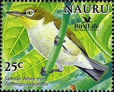 Somoan White-eye_(Zosterops samoensis) by Nauru_Post.