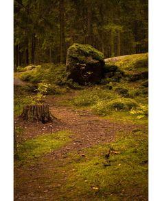 Stump -