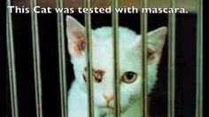 Boycott MAC!!! This cat was tested with MAC mascara!!! Buy only animal cruelty free products. Please sign and share this petition!
