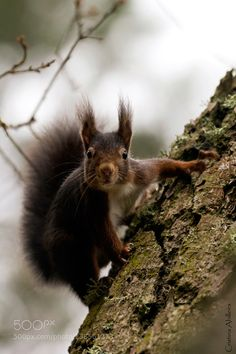 http://ift.tt/1K6283m #animals Little squirrel by yeyacas http://ift.tt/1o3an6H #pierceandbiersadorf