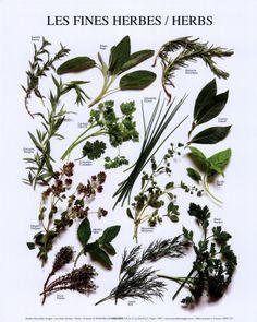Mixed Herbs Kunstdruk
