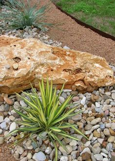 Design My Yard: use of diff sized rocks plus grasses/flax for a low water attractive garden Design M Texas Landscaping, Landscaping With Rocks, Front Yard Landscaping, Backyard Landscaping, Driveway Landscaping, Landscape Design, Garden Design, Rock Garden Plants, Drought Tolerant Landscape