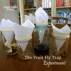 Four fruit fly trap baits put to the test!