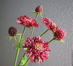 Купить Скабиоза пурпурная из полимерной глины. - бордовый, марсала, пурпурный, цветы ручной работы