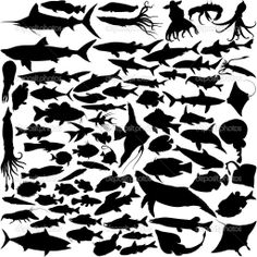 Sea creatures in silhouette