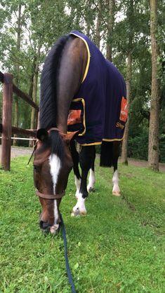 Cute Horses, Pretty Horses, Horse Love, Horse Girl, Horse Stables, Horse Tack, Most Beautiful Animals, Beautiful Horses, Aqha Western Pleasure