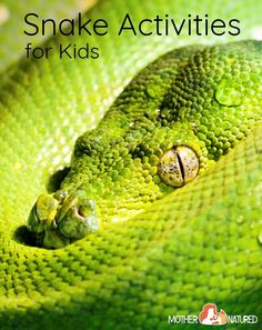 Activities for Kids - -Snake Activities for Kids - - What Animal Will You Be Reincarnated As? - Candice le Guillou - - What Animal Will You Be Reincarnated As? What Animal Will You Be Reincarnated As? Mo West Bengal Secondary class curriculum to add a . Snakes For Kids, Insects For Kids, Stem For Kids, Insect Activities, Nature Activities, Activities For Kids, Snake Crafts, Insect Photography, Young Animal