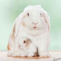 Mommy and Baby Bunny