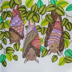 Bats From Millie Marottas Tropical World