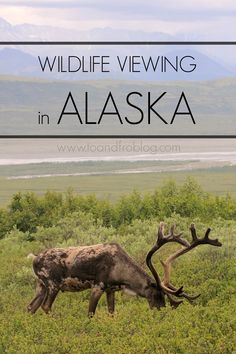 Where to view the best wildlife near Anchorage, Alaska.