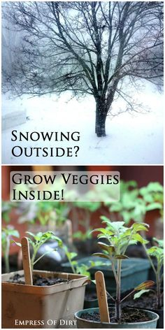Snowing outside? Grow veggies inside! See everything you need to get started with indoor food growing. #spon