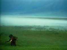 African Elephant, Ngorongoro Crater  Photograph by Chris Johns