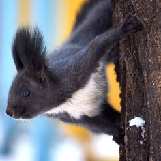 Squirrel in the winter wood