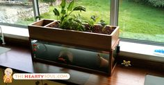 Aquaponics is a innovative new idea that combines aquaculture, which is the raising of fish for food (or other reasons) and hydroponics, which is the growing of vegetation and herbs without the use of soil. It is considered to be one of the most efficient forms of growing food in the world, mainly due to... View Article