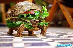 Turtle Burger #humor #lol #funny