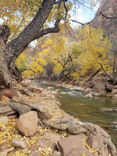 Zion Park, Zion National Park, National Parks, National Photography, Nature Photography, Nature Photos, Nature Images, Pictures To Paint, Landscape Photographers