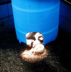 1000 Images About Upcycle Barrel Ibc Bucket Recycle Projects On Pinterest Aquaponics Hay