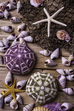 Sea Urchins With Starfish by Garry Gay - РАКУШКИ - Kunst Sea Urchin Shell, Sea Shells, Sea Urchins, Instalation Art, Shell Collection, Orange Aesthetic, Shell Beach, Seashell Crafts, Shell Art