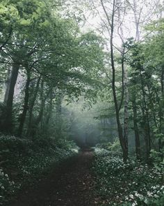 for more green aesthetic playlist covers, color palettes, wallpapers, and inspo click through to our post! Enchanted, Olympus Trip, Stop Cigarette, Fantasy Castle, Old Trees, Free Photography, Nature Photography, Walk In The Woods, Woodland Creatures