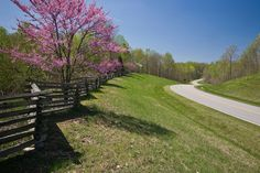Dogwoods on the Natchez Trace Parkway in springtime. Natchez Trace, Spring Time, Garden Landscaping, Tennessee, Travel Guide, Scenery, Hiking, Country Roads, Landscape