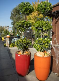 Nursery Supplies, Fall Planting, Irrigation, Topiary, Shrubs, Perennials, Outdoor Living, Patio, Garden