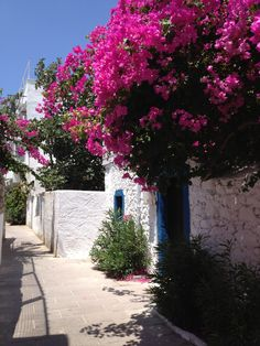 Typical house and typical flower in Bodrum