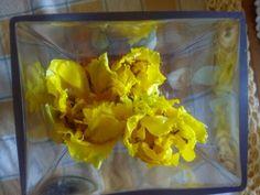 As minhas tulipas! :)