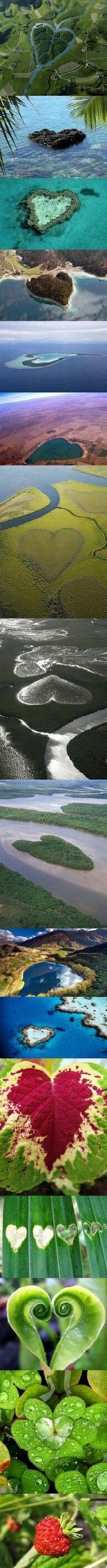 Hartjes in de natuur