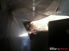 Cami sleep