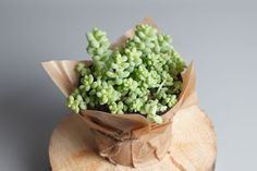 - House Plants - 9 Tiny Houseplants Prove That Bigger Isn't Better The miniature trend is hot, and houseplants are hopping on the bandwagon. Add these small cute plants to your cubicle, apartment, or tiny house.
