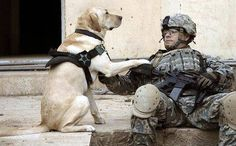 Thank you to all the #men, #women & #dogs who serve our country. We hope everyone is having a wonderful #MemorialDay!