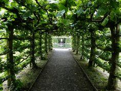 Levens Hall Garden, Green Tunnel - UK