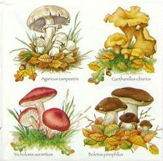 4 x Single Luxury Paper Napkins for Decoupage and Craft Vintage Mushrooms Botanical Drawings, Botanical Illustration, Botanical Prints, Mushroom Drawing, Mushroom Art, Wild Mushrooms, Stuffed Mushrooms, Painting & Drawing, Watercolor Paintings