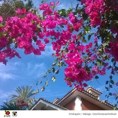 Lovely, Thank you! RT  ‏Spain   The #beautiful flowers of #Málaga #picoftheday #visitspain