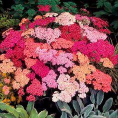 Die 41 Besten Bilder Von Garten Flower Beds Garden Plants Und Gardens