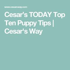 Cesar's TODAY Top Ten Puppy Tips | Cesar's Way