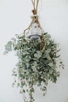 Tie a few branches of fresh eucalyptus around your shower head for a refreshing scent every time you turn on the hot water is part of Eucalyptus shower - Dry out used coffee grounds, sprinkle baking soda, and simmer vinegar Bathroom Hacks, Bathroom Plants, Bathroom Spa, Eucalyptus Shower, Dried Eucalyptus, Hanging Plants, Indoor Plants, Power Trip, Small Bathrooms