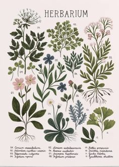 Herbarium ~ vintage inspired botanical art print ~ white Poster by izptica | Society6