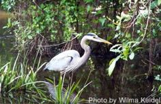 Six Mile Cypress Slough Preserve (rated #1 on trip adv)! Guided Tours for apprx. 1 hour on Wed. only @ 9:30....arrive by 9:00 (pay for parking only $1 per hour)