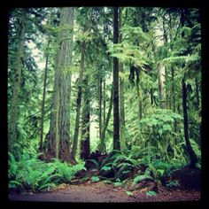 Cathedral Grove, BC (Vancouver Island)