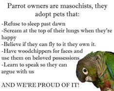 Parrot owners are masochists #parrothumor