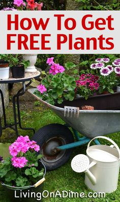 Container Gardening For Beginners How To Get FREE Or Cheap Plants and Seeds - Gardening is a fun hobby that is refreshing can easily be inexpensive. Here are some easy ways to get free plants and seeds for your garden! Diy Garden, Lawn And Garden, Garden Projects, Garden Landscaping, Shade Garden, Garden Tools, Dream Garden, Herb Garden, Landscaping Ideas