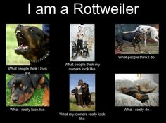 Absolutely the truth...i have the most sweetest german rotti